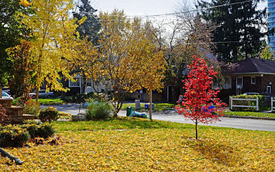 2013-11-04 suburbia fall red maple